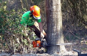Benefits of Tree Removal by Professionals