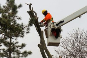 Tree Cutting Brampton