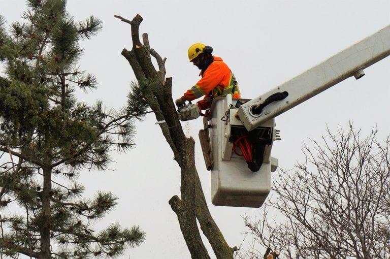 Tree Cutting Brampton