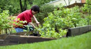 What Is The Best Way To Take Care Of Your Lawn