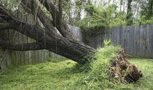 Who Do You Call To Remove A Fallen Tree