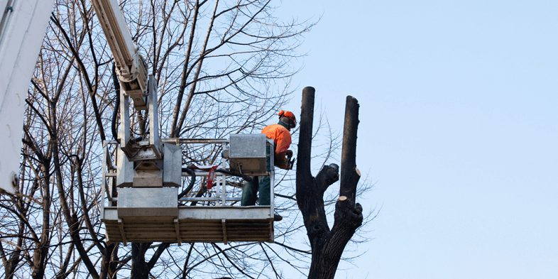 Why Is Tree Pruning Important