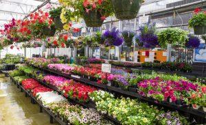 Wholesale Garden Center Long Island